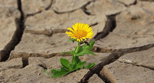 Bissets Blog Feature Image 10 June 2020 2